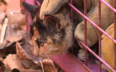 Tierischer Einsatz: Feuerwehr rettet Babykatze mit Bolzenschneider aus Gitterbox: Spaziergänger entdeckt zufällig eingeklemmtes Katzenbaby - Verängstigte Katze faucht und schreit - Feuerwehr befreit Katze mit Bolzenschneider - Katzenbaby kommt in eine Wildtierauffangstation